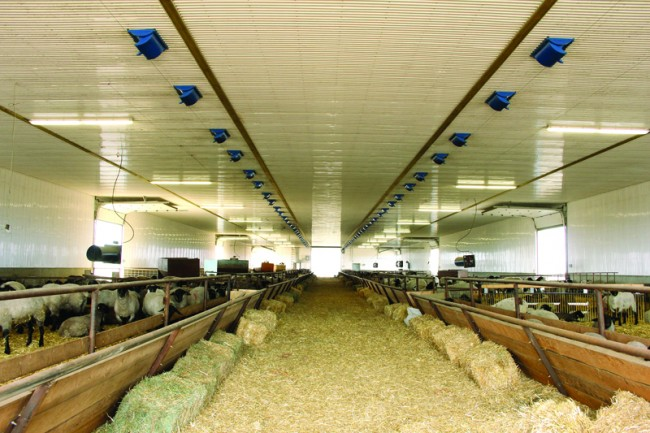 Interior of the new barn. Note air intakes on ceiling.
