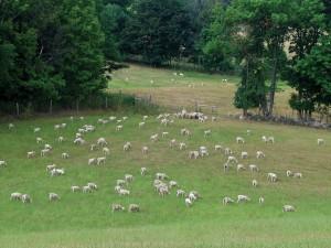 Shepherd's Choice, Norwood, Ontario