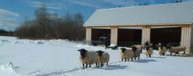 Sheep Canada Magazine - The Girls