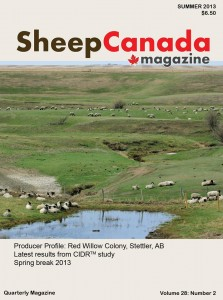 Sheep Canada - Summer 2013